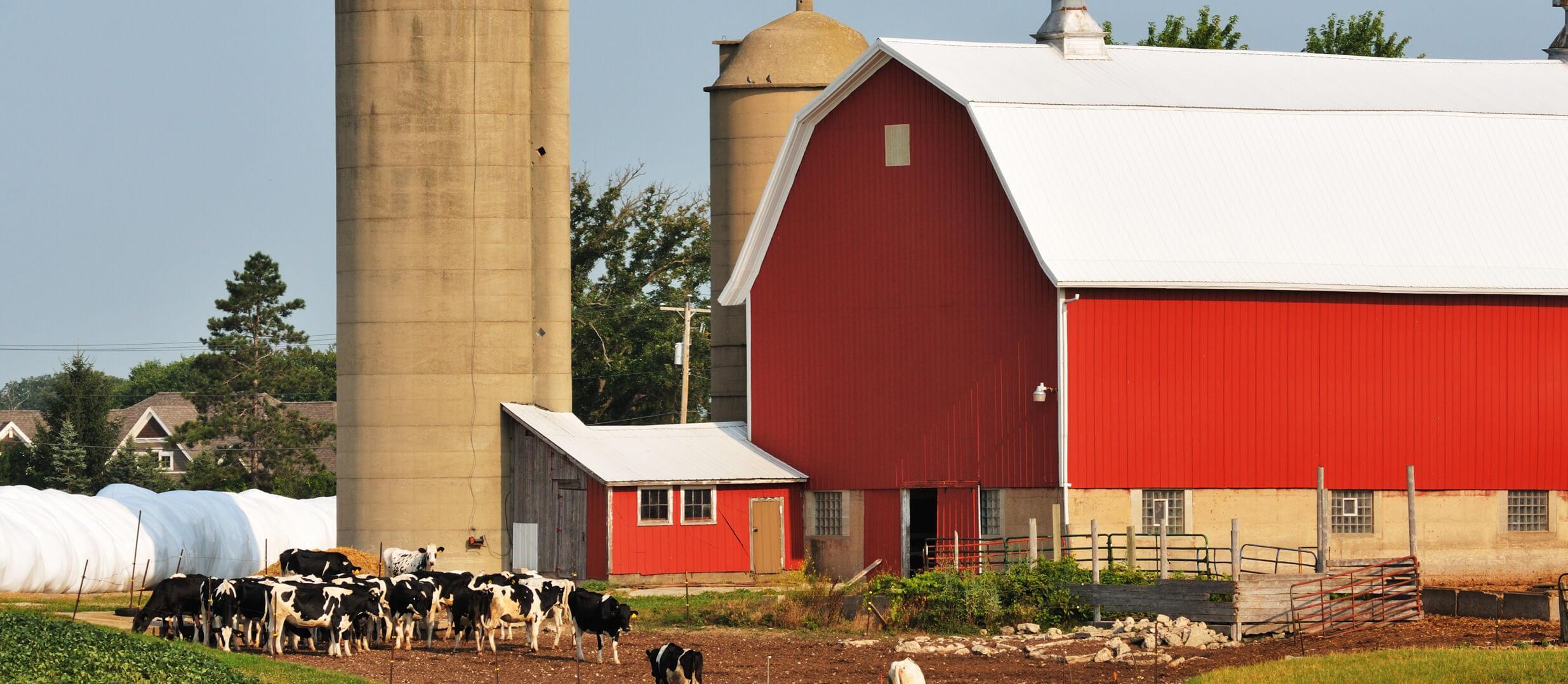 Dairy Farm Photo